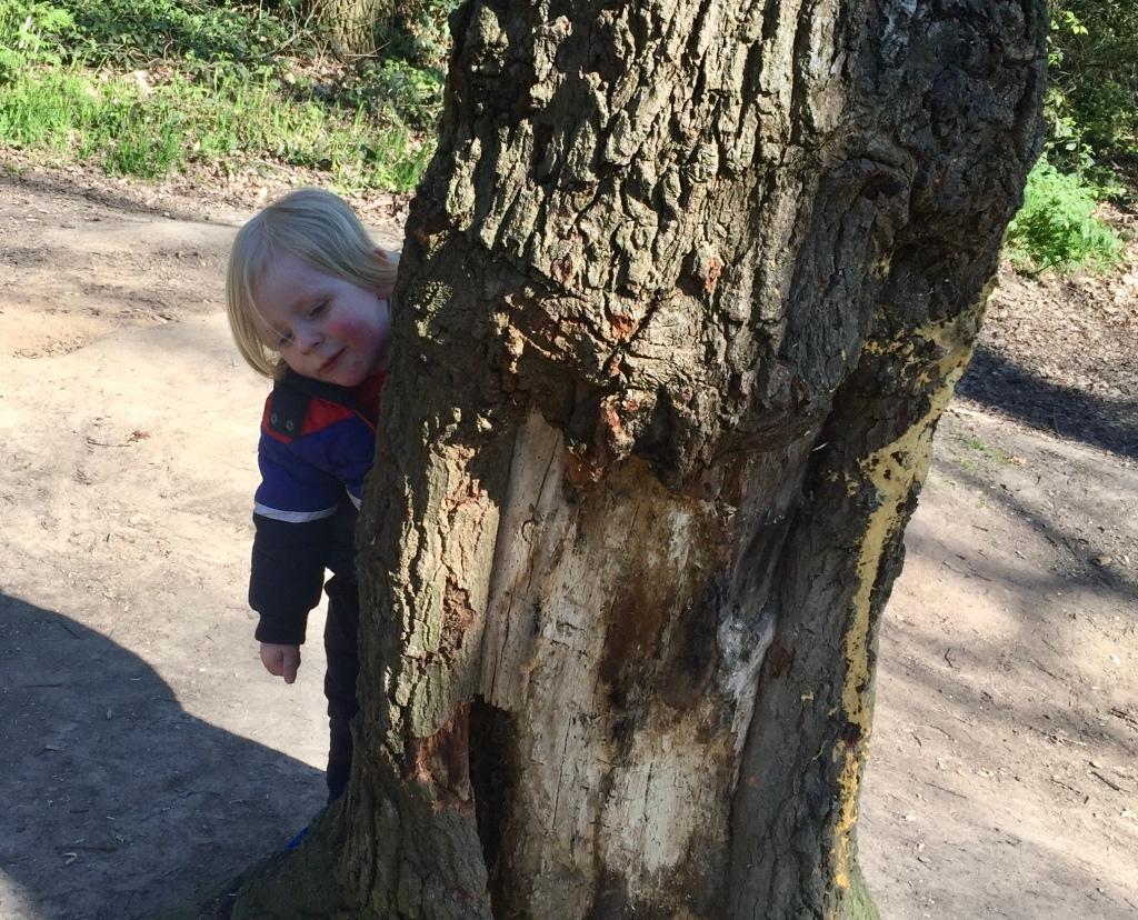 Hide and seek at Pudney wood